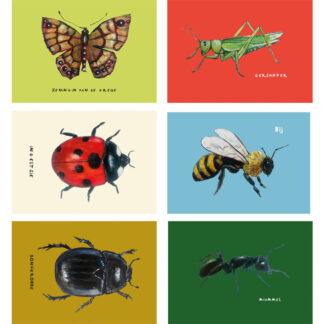 Insectenkaarten met Friese namen kaarten, insecten, mier, sprinkhaan,vlinder, lieveheersbeestje, bij, mestkever