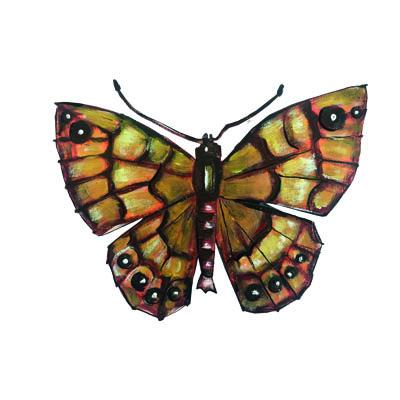 illustratie van de Argus vlinder van Atelier Pjut